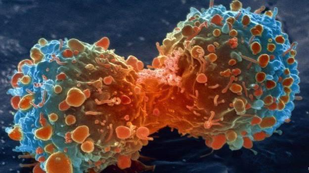 celulascancer